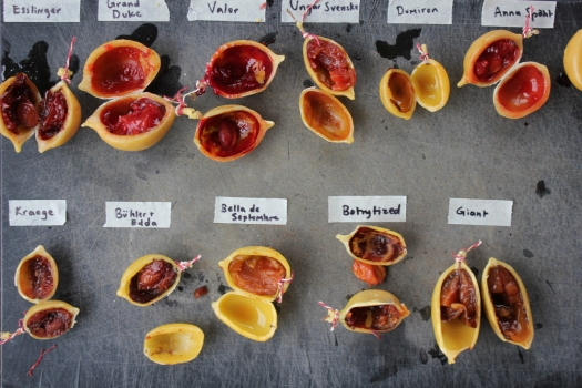 Waxed & rotting plums, Nordic Food Lab